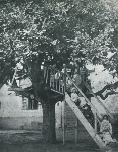 The Tree House, one of the features of High Constantia.